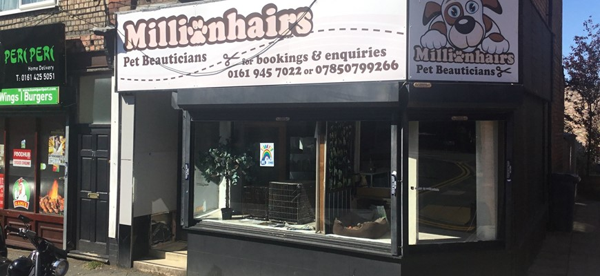 Millionhairs Dog Grooming Comes To Market